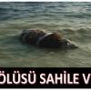 İnek Ölüsü Sahile Vurdu