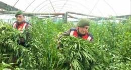 Jandarma uyuşturucu ile etkili mücadele ediyor