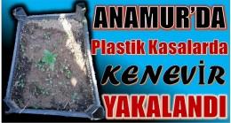 ANAMUR'DA PLASTİK KASALARDA KENEVİR YAKALANDI