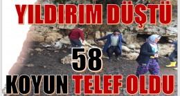 Anamur'da Yıldırım Düştü; 58 Koyun Telef Oldu